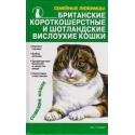 Британские короткошерстные и шотландские вислоухие кошки/ Семейные любимцы